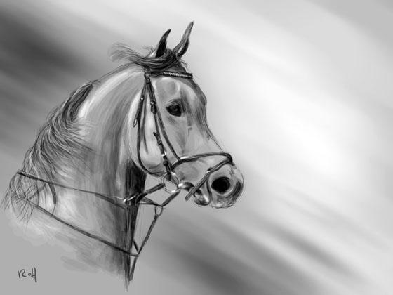 Goede Portrettekenaar Rolf - probeer zelf een paard te tekenen DZ-29