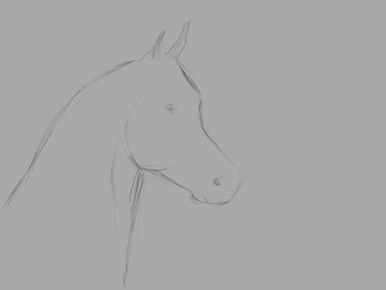 Super Portrettekenaar Rolf - probeer zelf een paard te tekenen QV-77