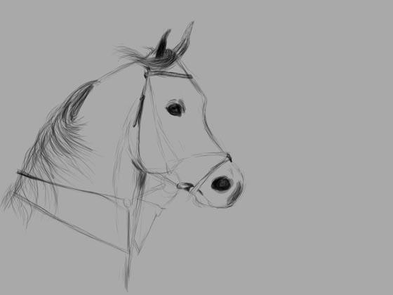 Uitgelezene Portrettekenaar Rolf - probeer zelf een paard te tekenen FW-07